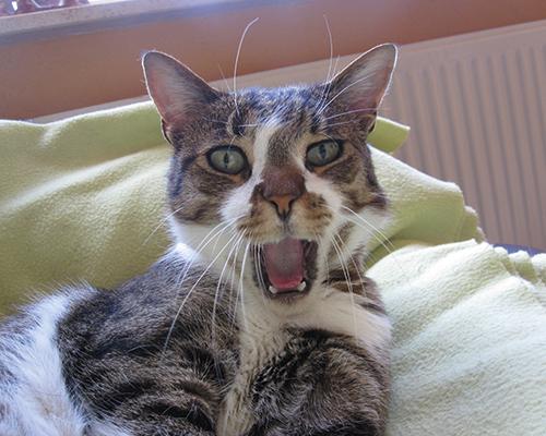 happy cat consult