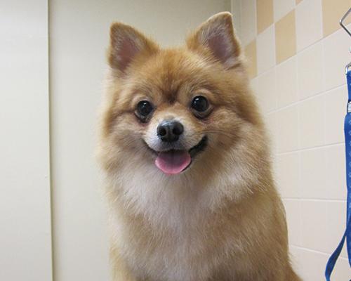 hond12