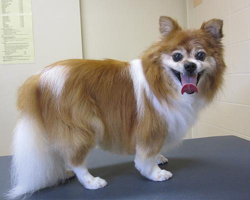 hond16
