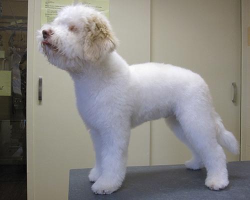 hond5